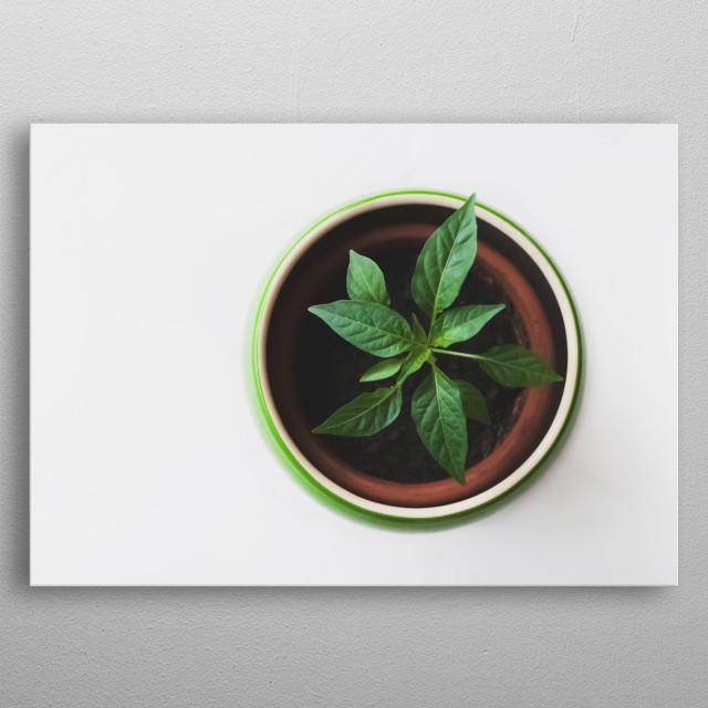 Plants 20 metal poster