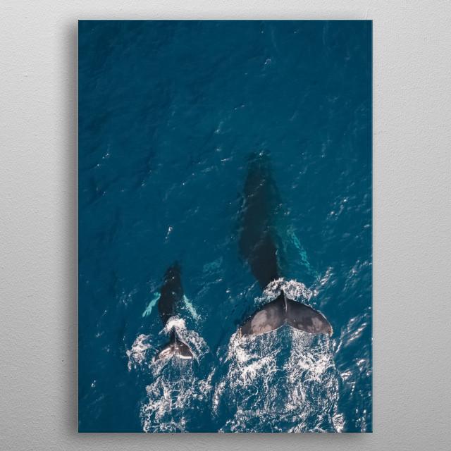 Water 206 metal poster