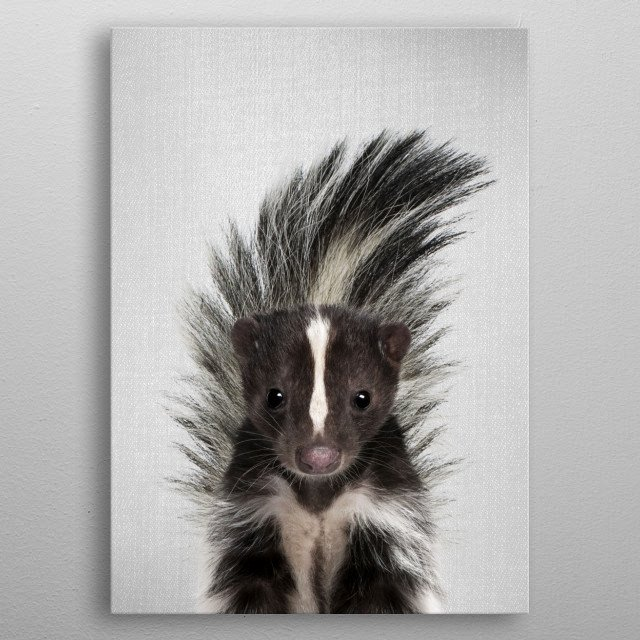 Skunk - Colorful.  For more colorful animals check out the collection in the main page of my shop Gal Design. metal poster