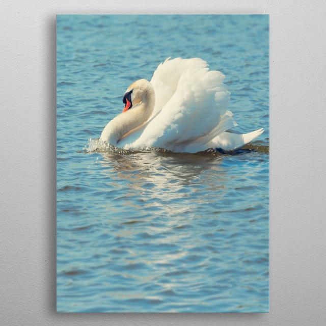 Pretty Swan on a lake metal poster