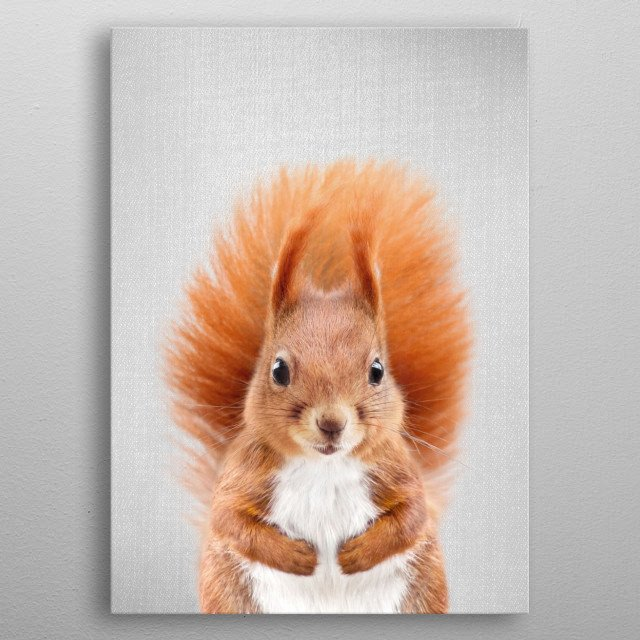 """Squirrel 2 - Colorful.  For more colorful animals check out the collection in the main page of my shop """"Gal Design"""". metal poster"""