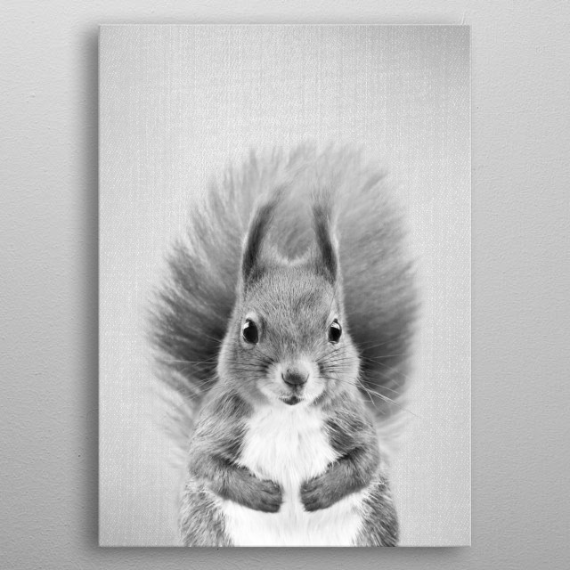"Squirrel 2 - Black & White.  For more black & white animals check out the collection in the main page of my shop ""Gal Design"". metal poster"