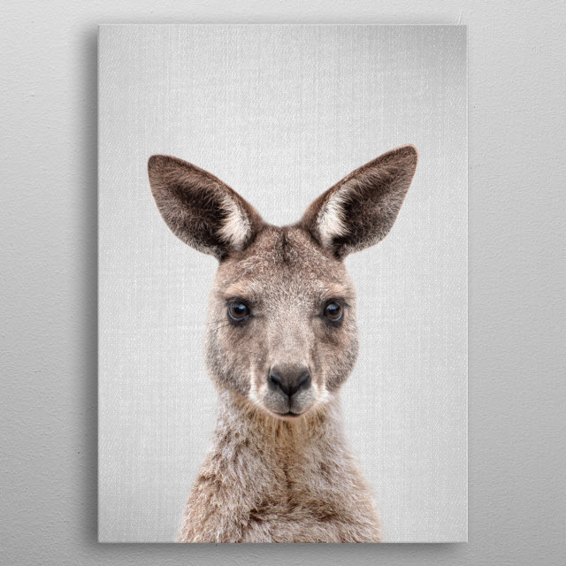"Kangaroo - Colorful. For more colorful animals check out the collection in the main page of my shop ""Gal Design"". metal poster"