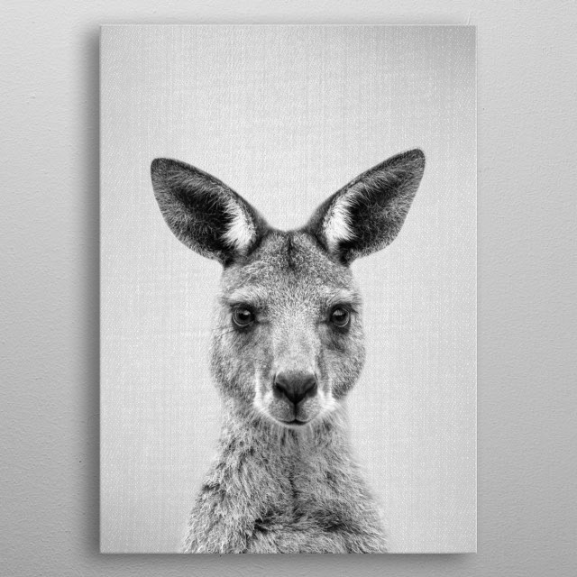 "Kangaroo - Black & White. For more black & white animals check out the collection in the main page of my shop ""Gal Design"". metal poster"