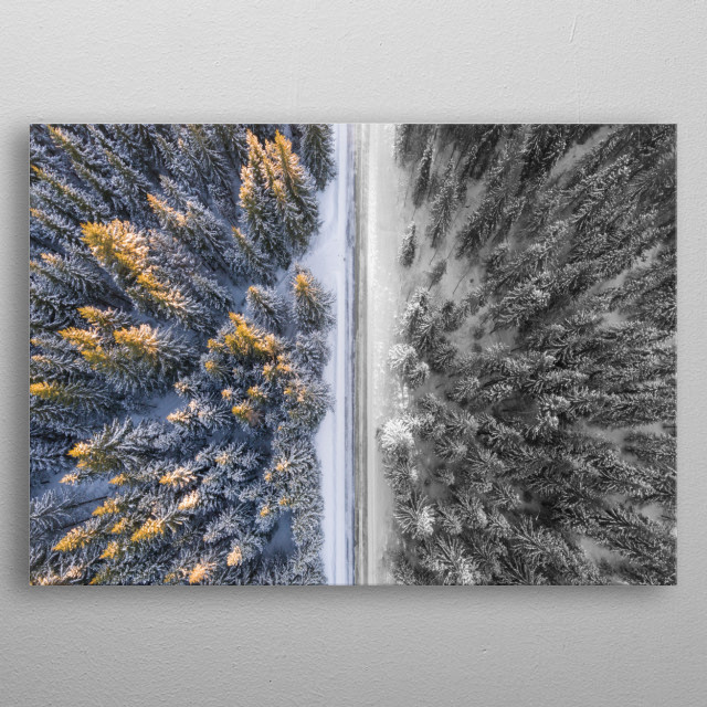 picture of a trees from above. One side colorful, one side black and white metal poster
