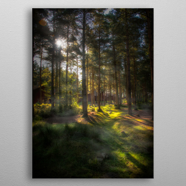 The sun rising through the trees. metal poster