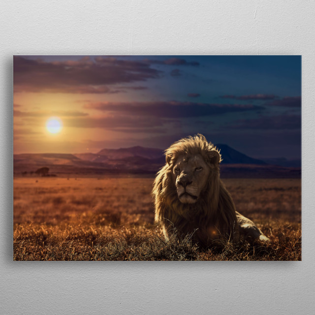Photo special series Adventures on the Savannah, made in the savannas of South Africa in photographic safaris held in the city of Port Eli metal poster