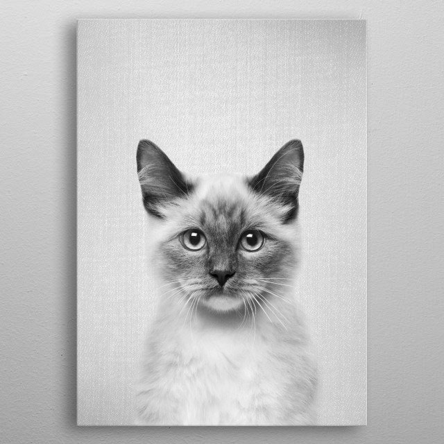"Cat - Black & White.  For more black & white animals check out the collection in the main page of my shop ""Gal Design"". metal poster"
