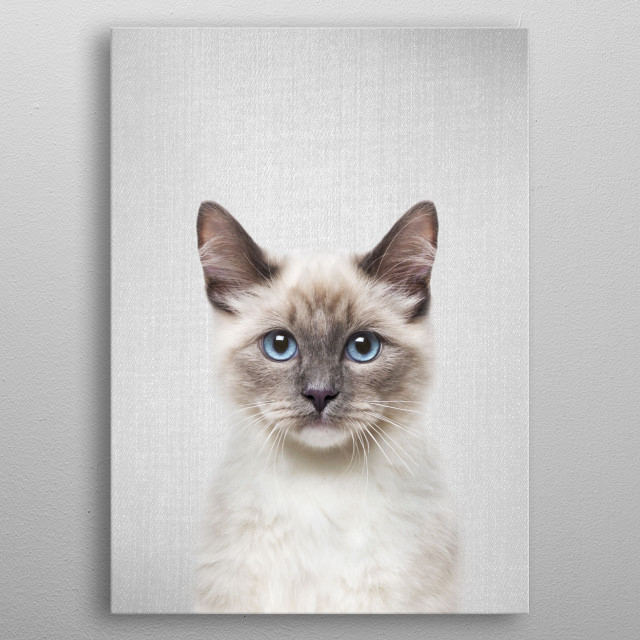 """Cat - Colorful.  For more colorful animals check out the collection in the main page of my shop """"Gal Design"""". metal poster"""