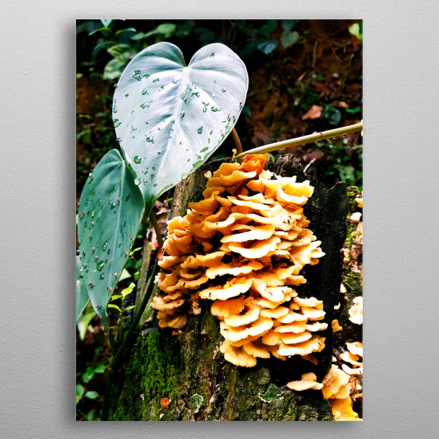 This plant look like a heart is a masterpiece of green nature of our planet earth metal poster