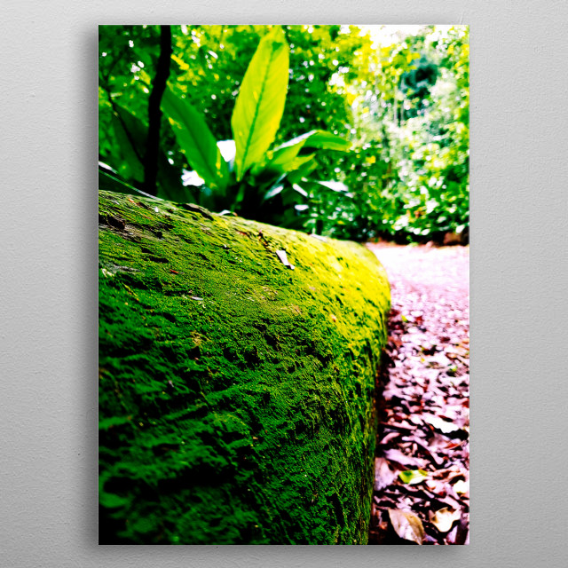 This green moss is a masterpiece of green nature of our planet earth metal poster