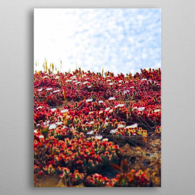 blooming red flowers with ocean background metal poster