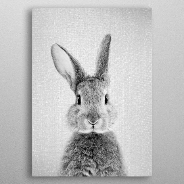 "Rabbit - Black & White.  For more black & white animals check out the collection in the main page of my shop ""Gal Design"". metal poster"