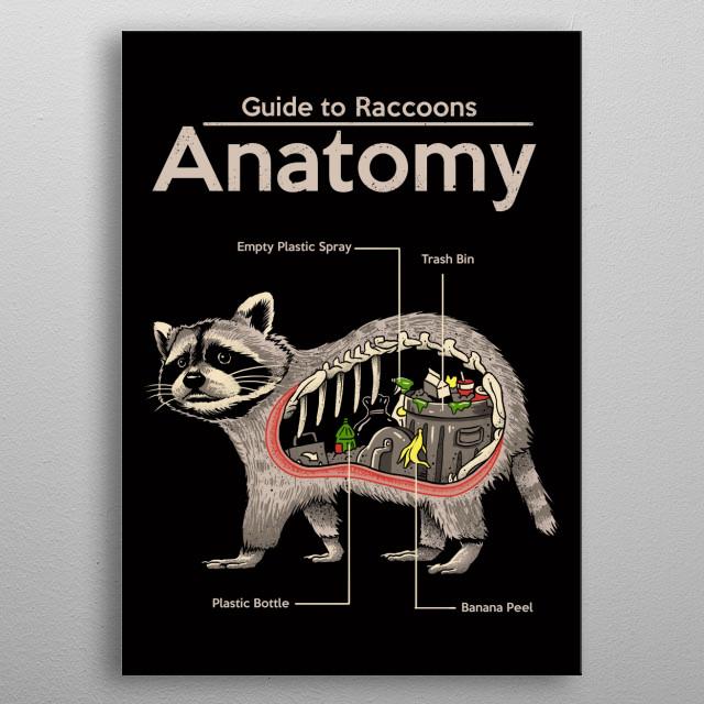 Anatomy depiction of a trash panda. metal poster