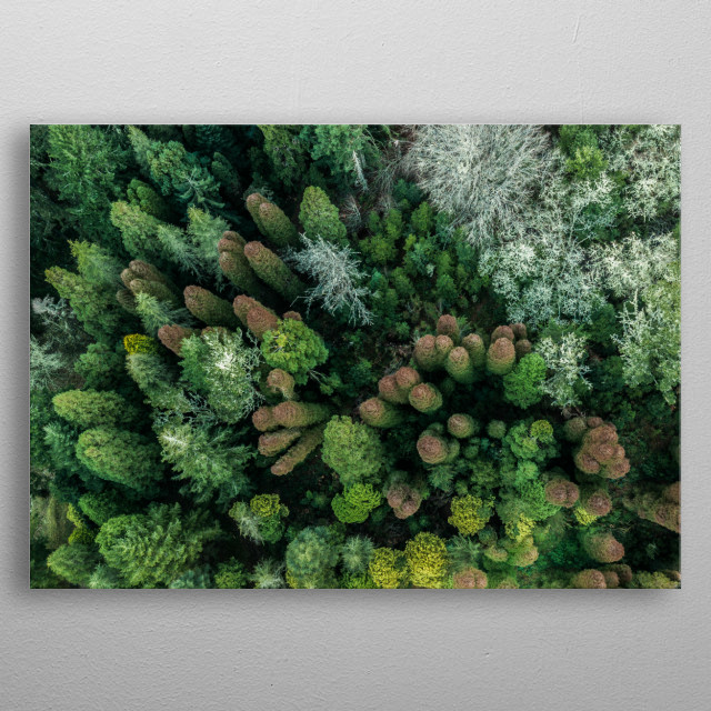 Aerial top down view of autumn forest with green and orange trees in Madeira island Portugal metal poster