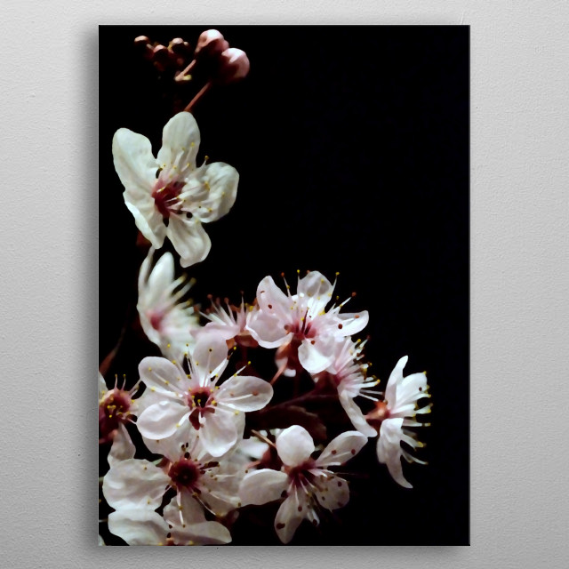 Beautiful spring blossoms on black background. metal poster