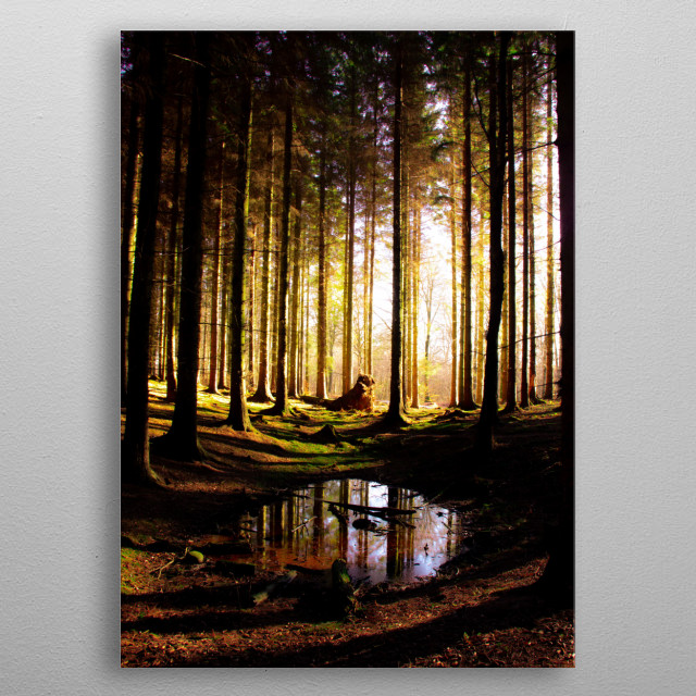 A photograph of a secret spot I found in a forest once metal poster
