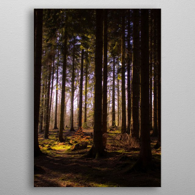 A photograph of a silent path through the forest metal poster