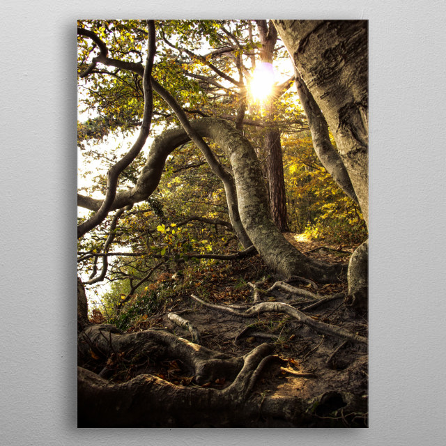 A photograph of trees having too much fun metal poster