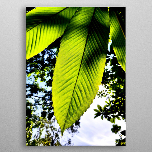 GRATITUDE FOR TREES AND MOTHER NATURE FOR ITS BEAUTY AND PROTECTION metal poster
