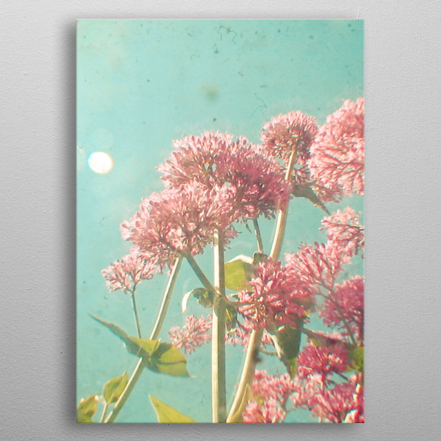 A photograph looking up through a bed of Milkweed. Taken using two cameras at the same time, a vintage Kodak Duaflex and a digital camera. metal poster