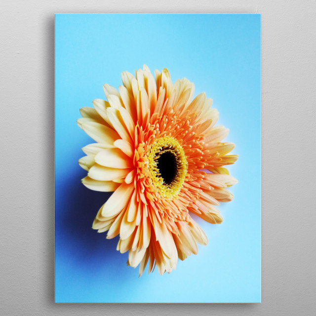 Close Up Photograph of a flower metal poster