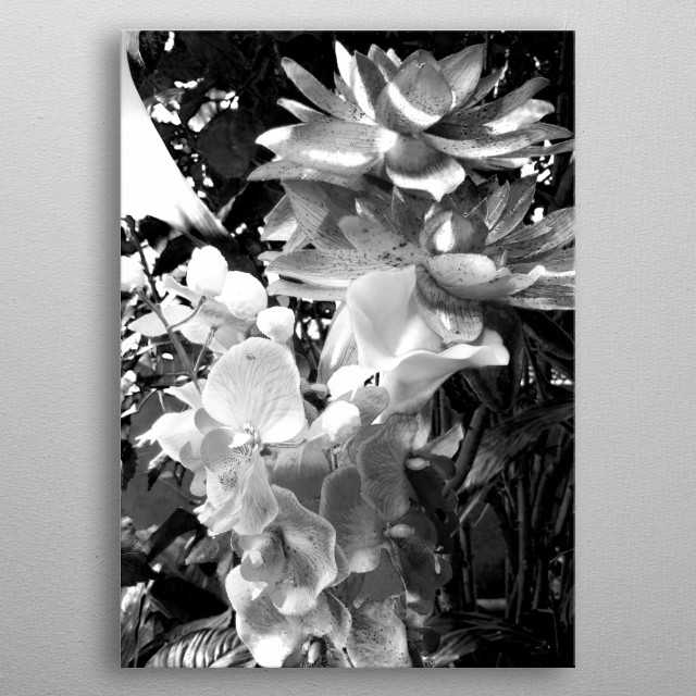 This photo was taken in Vienna in Butterfly house. If you want to see them in color check my Floral collection.  metal poster