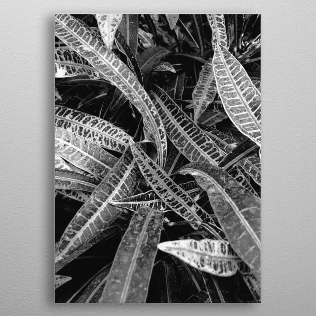 Close up photo of plants leaves. The same photo are available also in two different colors.  metal poster