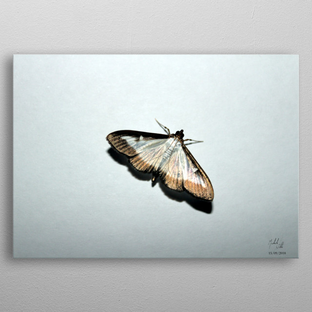 Photography depicting a golden butterfly. Author: Michele Vitti metal poster