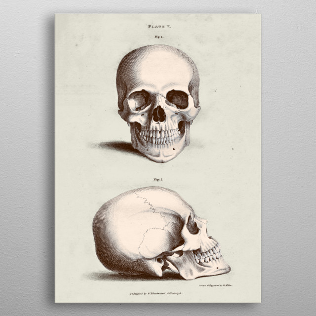 A vintage illustration from an antique anatomy book. Great for doctor offices, or just for some unique home décor. metal poster