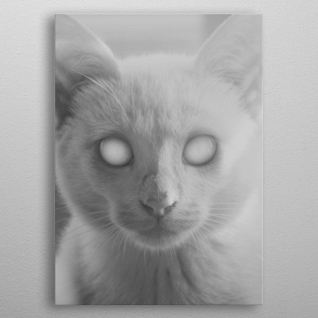 This cat is either cute, creepy or both. I want to hug it though. metal poster