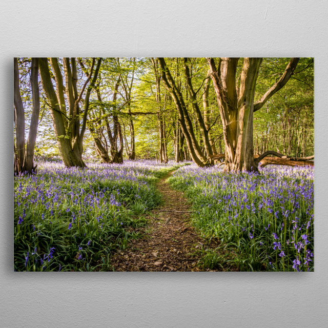 Taken in a Woodland in the county of Norfolk in the UK town of Watton. metal poster