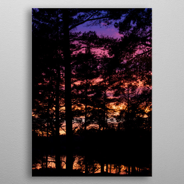 Sunset walks in the woods Stockholm Sweden  metal poster