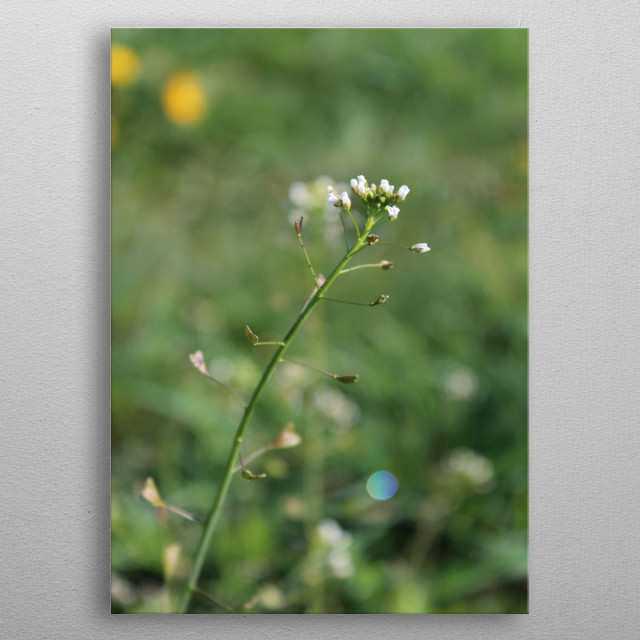 Beautiful flower with a leaves in s shape of hearts.  metal poster