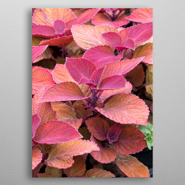colorful decorative leaves in the garden metal poster