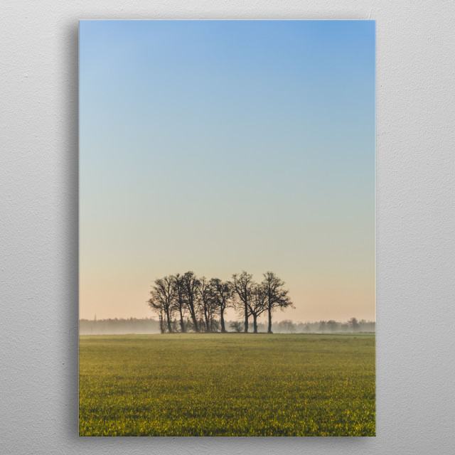 A small group of trees on a field, summer morning metal poster