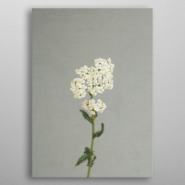 A still life photograph of wild flowers. metal poster