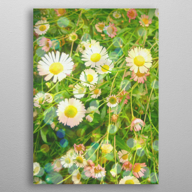 A colourful photograph of a bed of Daisies. metal poster