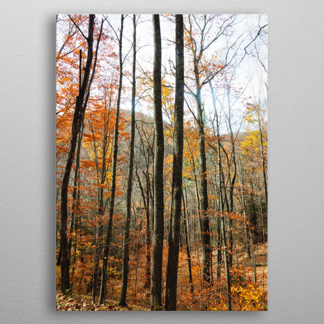 A small portion of the Fanny Bennett Hemlock Grove on one side of Spruce Knob, West Virginia  metal poster