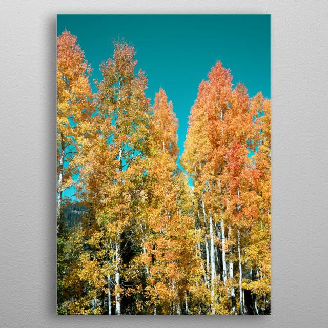 Fall aspens in San Juan County, Colorado USA - Original image from Carol M  metal poster