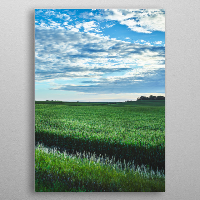 A cornfield seems to stretch forever in the rolling hills of Audubon County, Iowa  metal poster
