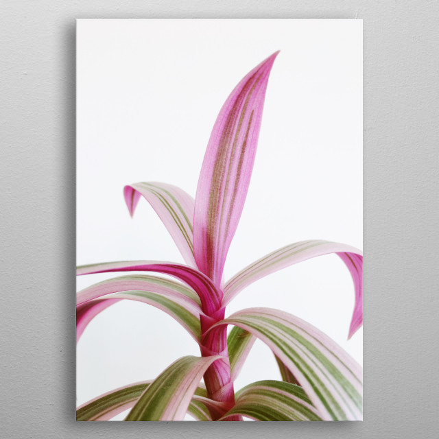 A still life plant photograph in pastel pink and green, metal poster