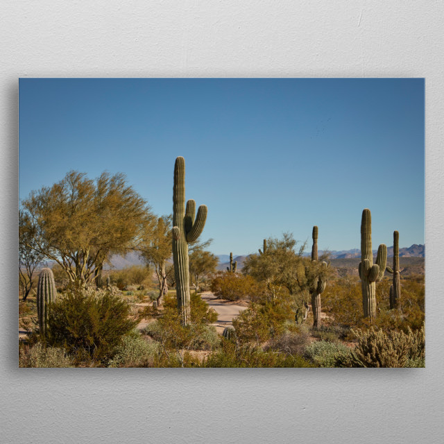 Saguaro catci proliferate throughout the course at the We-Ko-Pa Golf Club in the Sonoran Desert outside Fort McDowell, Arizona  metal poster