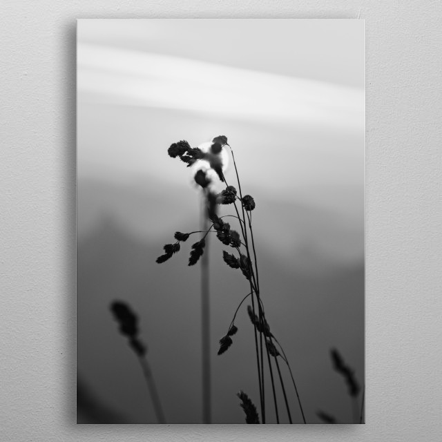 Photography inspired by the beginning of the photography and the nature. metal poster