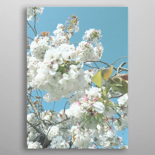 A photograph of a blossom tree in full bloom. metal poster
