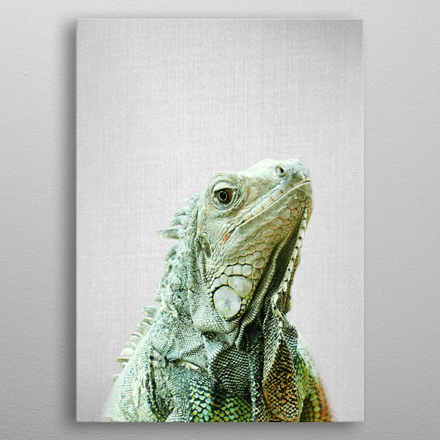 """Iguana - Colorful.  For more colorful animals check out the collection in the main page of my shop """"Gal Design"""". metal poster"""