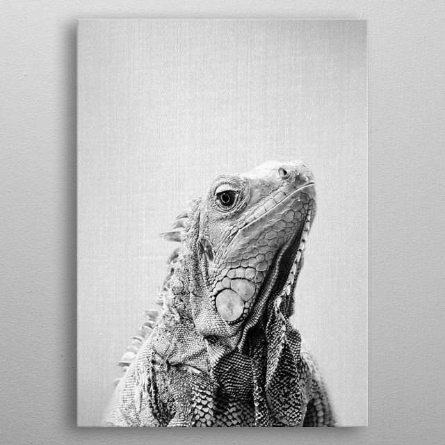 """Iguana - Black & White.  For more black & white animals check out the collection in the main page of my shop """"Gal Design"""". metal poster"""