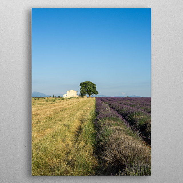 Lonely tree and a house in Provence, France metal poster