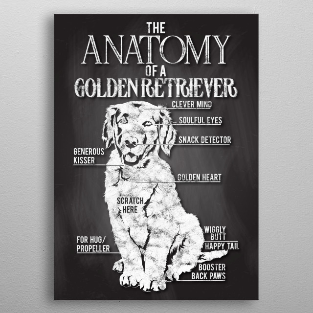 An adorable poster of a Golden Retriever with its lovable traits. Place this in your home or office to have a happy feel around. metal poster