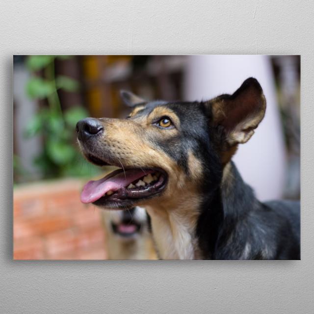 beautiful regard dog metal poster